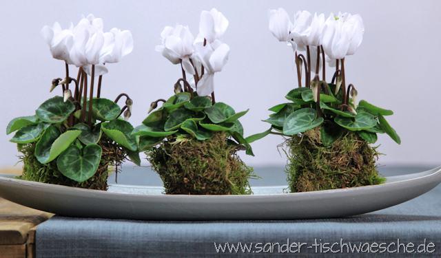 Alpenveilchen dekorieren mit Moos