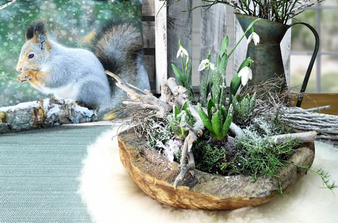 Schale mit Schneeglöckchen und Kissen Eichhörnchen von Sander