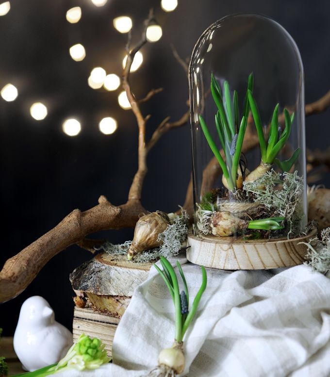 Winterdeko oder Frühlingsdeko: Muscari unter Glas