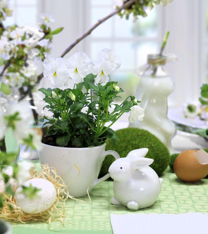 Blumendeko zu Ostern: Hornveilchen